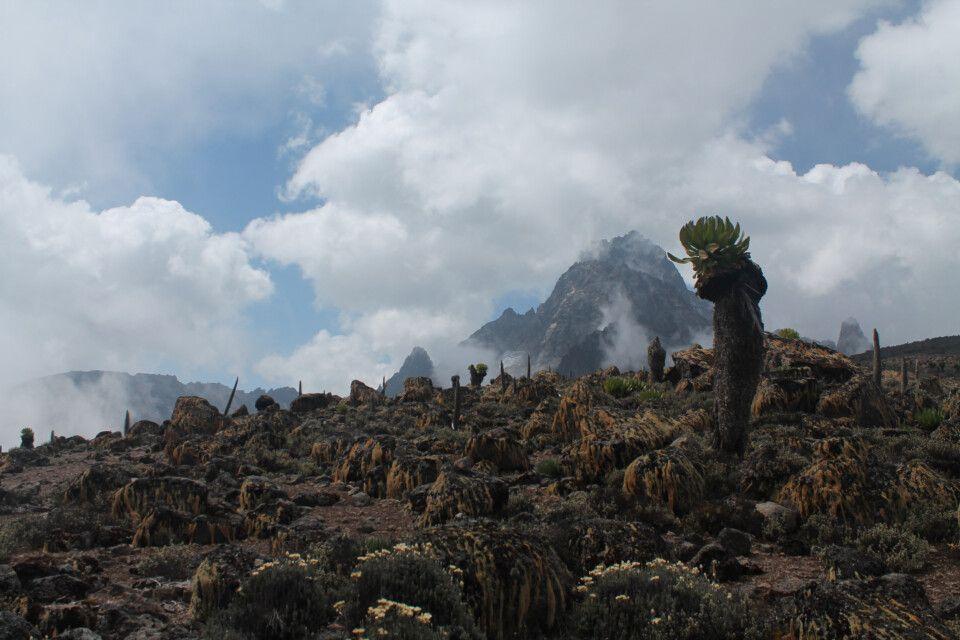 Da ist er endlich! Die Gipfel des Mount Kenya kämpfen sich schüchtern durch die Wolken.