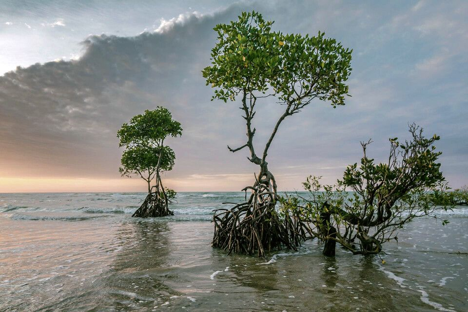 Sundarbans – Mangroven Abenddämmerung