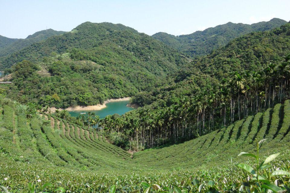 """Eine Teespezialität in Taiwan ist der Oolong Tee. Oolong bedeutet """"schwarzer Drache"""". Um die Entstehung dieses Namens ranken sich zahlreiche Legenden."""