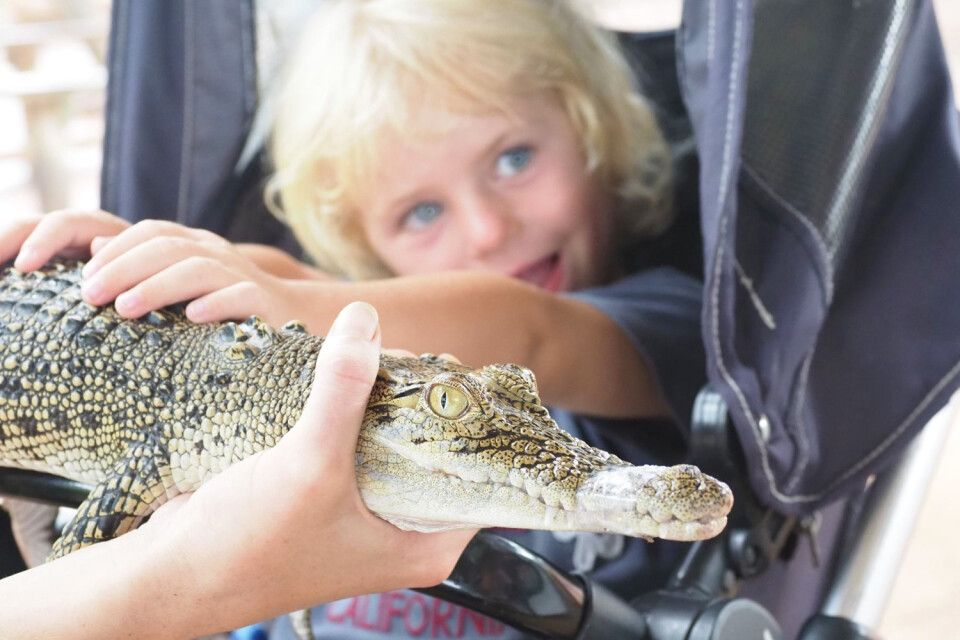 """Anfassen ja, küssen nein – Krokodil """"hautnah"""" erleben, was für ein Abenteuer für die Kleinen. In Deutschland eher undenkbar, in Australien normal. Unbedingt probieren…"""