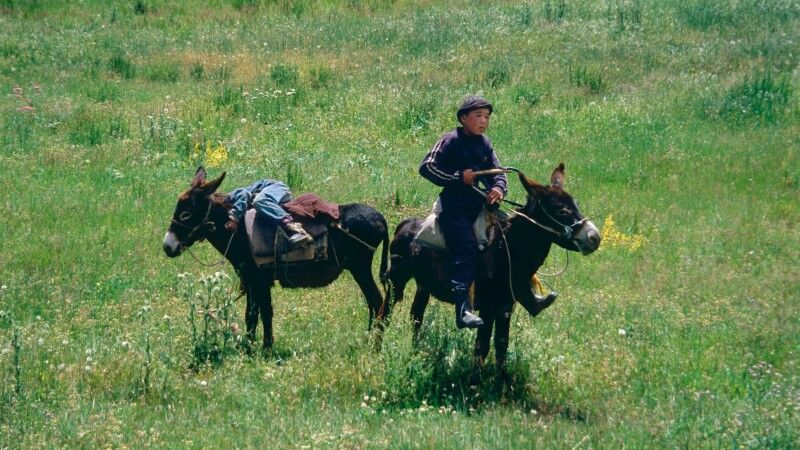 Junge mit Eseln in Kirgistan © Diamir