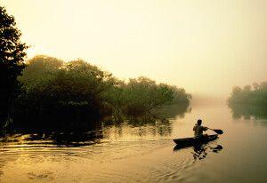 Frühnebel auf einem Seitenarm des Amazonas