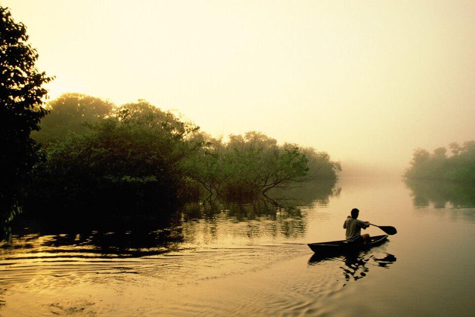 Frühnebel auf einem Seitearm des Rio Negro