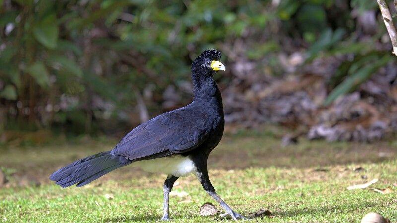 Vielfältiges Vogelwelt Guyanas © Diamir