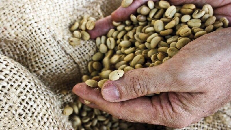 Ungerösteter Kaffee © Diamir